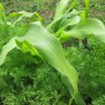 農園プログラム 種と苗
